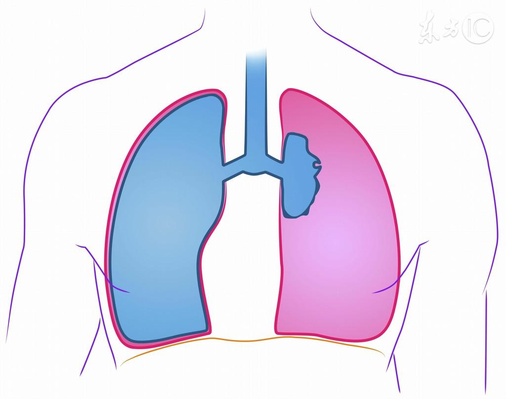 经常做一件事帮肺排毒