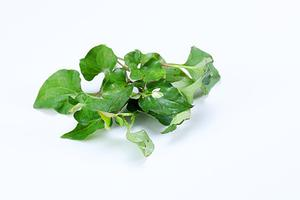蕨菜致癌鱼腥草有毒?致癌食物并不一定吃了就致癌