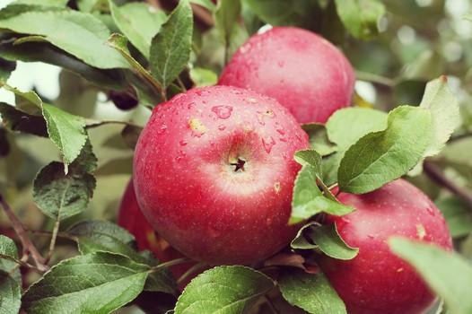 苹果这么吃很伤身