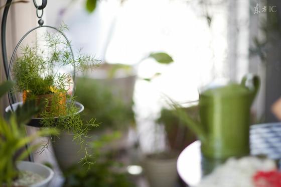 冬天室内放三种植物最好