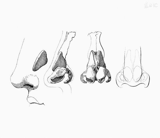 为什么抠鼻屎会上瘾?|挖鼻屎|鼻腔