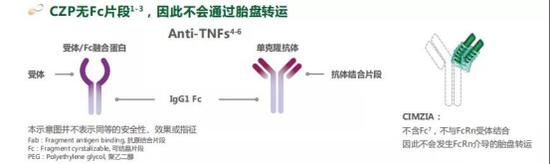 培塞利珠单抗不同TNF-α抑制剂的分子结构