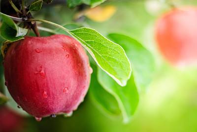 每天吃个苹果好处多