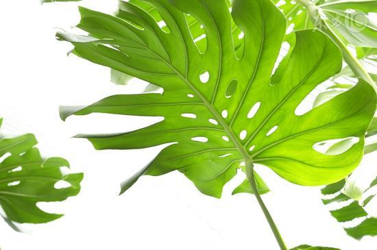 这五种植物千万别在家里养