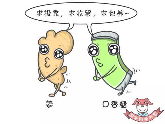 姜和口香糖并不是必不可少的,但关键时刻能够起到意想不到的作用。