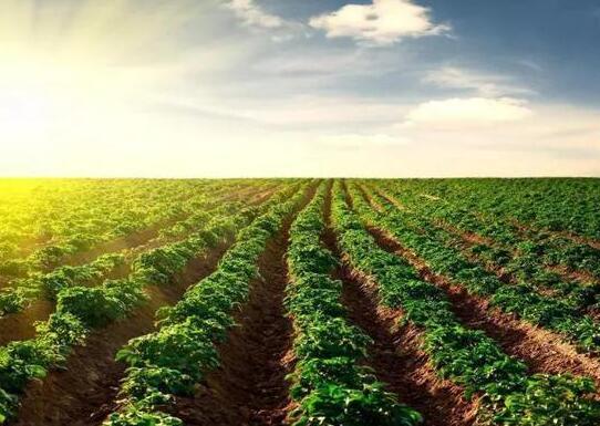 河北200万亩地季节性休耕