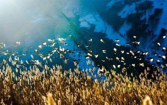 敦煌月牙泉景区冬季现万鸟逐沙奇观