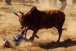 邯郸1牛受到惊吓挣脱绳索疯狂逃窜 1人不幸被撞伤