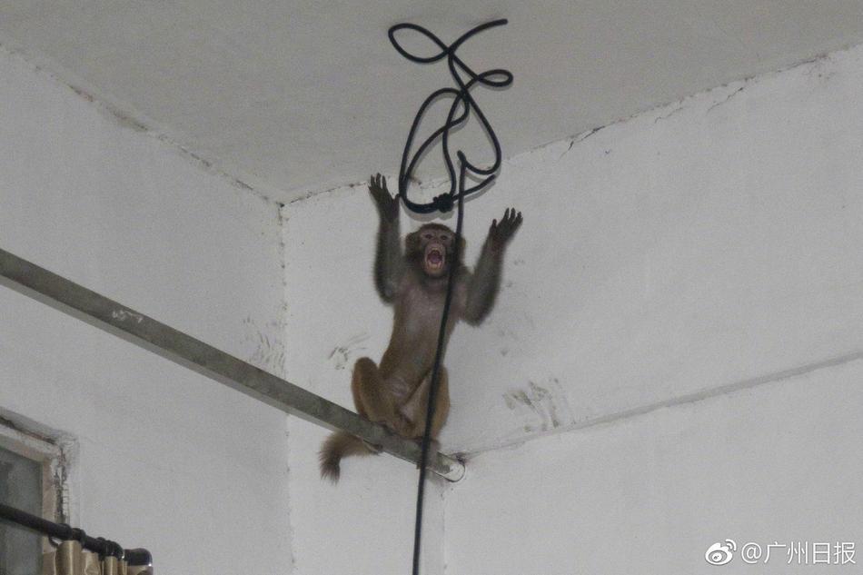 杭州现人猴大战:一猴子闯居民区逍遥3天 被五花大绑带走