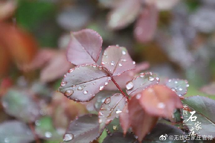 这些与花有关的诗词你都读过吗?