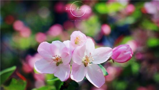 峨眉山寺院里的春天