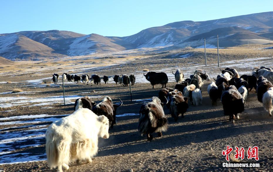 新疆哈巴河雾凇奇观醉游人