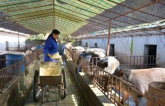 中小型规模化猪、牛养殖场粪污综合利用技术榜单