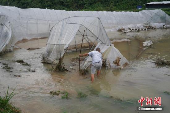 资料图:村民查看被洪水损毁的大棚。中新社记者 贺俊怡 摄
