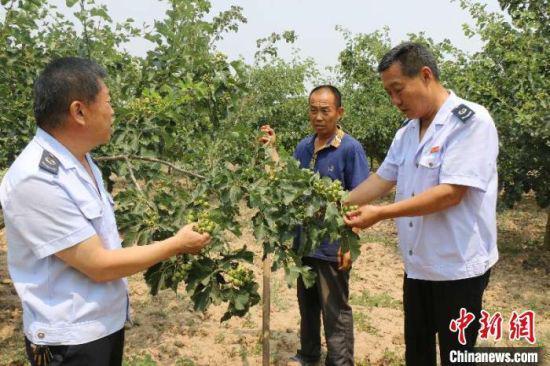"""""""一个队长一个兵"""" 河北威县驻村工作队精准帮扶助脱贫"""