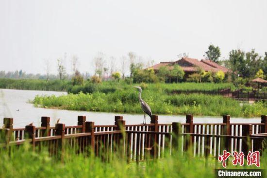 鸟儿在南宫湖湿地公园栖息。 田威 摄