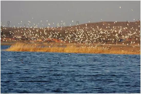 以前,康巴诺尔湖常有大批的鸟类栖息,当地人以为就是一般的水雀雀。2014年4月,全国湿地保护委员会委员、北京湿地研究中心专家、首都师范大学教授洪剑明在康巴诺尔湖进行国家湿地公园考察时,意外发现这些水雀雀是世界珍稀濒危鸟类遗鸥,当时有约3000只之多,证明了康保康巴诺尔湖是生物多样性最丰富的湖泊湿地之一。   据国际鸟类联盟估算,目前,全球遗鸥数量约1.