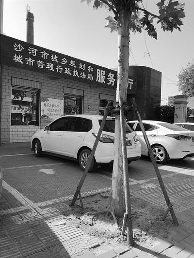 邢台沙河市一条1.5公里盲道上栽...