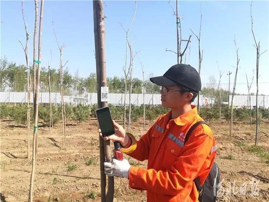 工作人员在雄安新区10万亩苗景兼用林工程现场录入苗木定位信息。原付川摄