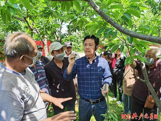 板栗专家王广鹏与栗农互动交流种植技术。贾云霞 摄