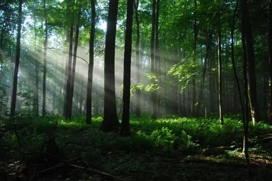 河北海滨国家森林公园,位于秦皇岛市旅游区的黄金地带,北距秦皇岛市