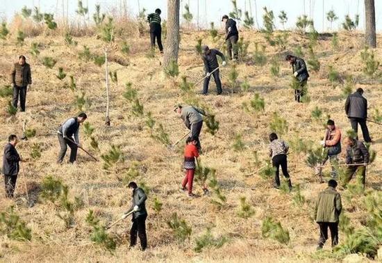 每人每年义务植树3至5棵
