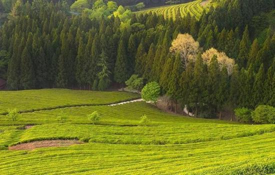 三北防护林五期工程: