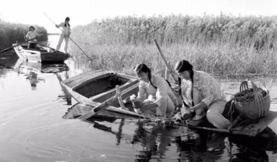 1961年10月,白洋淀圈头公社的女社员正在采菱角和鸡头米。