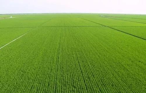 补充耕地任务完成情况纳入考核体系