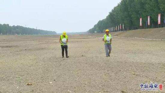 6月25日,唐河污水库工作人员正在进行现场播种。记者马梦迪摄