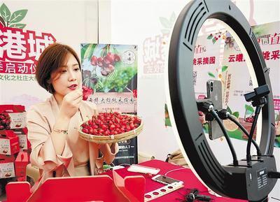 近日,网络主播在秦皇岛市海港区杜庄大樱桃采摘节上帮助果农直播销售樱桃。 新华社发