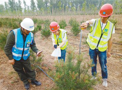 工作人员在对树木进行现场实测,并录入数据。 张志锋摄