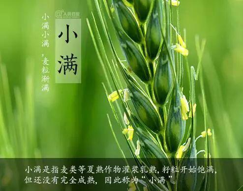 小满者,物至于此,小得盈满。大麦等夏熟作物籽粒渐饱满,但尚未成熟;