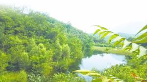 """多年的封山育林,让唐县黑角村绿化率达到90%以上,成了""""太行绿眼""""。"""