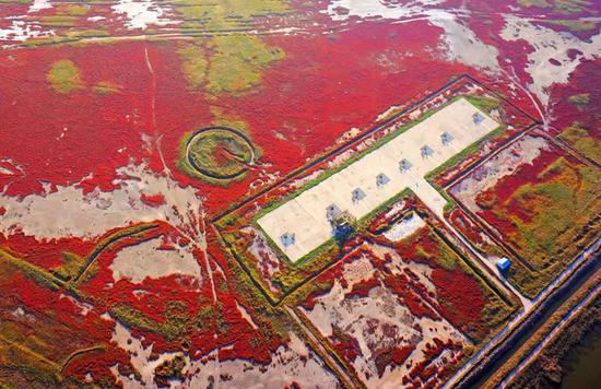 天津北大港国际重要湿地(国家林业和草原局供图)
