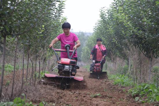 贫困户崔立改正在海棠种植基地除草