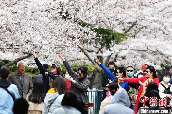 游客在青岛中山公园的樱花树下翩翩起舞,享受美好春光。 王海滨 摄
