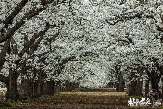 摄影师:北京老夏