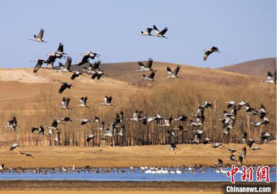 河北坝上闪电河国家湿地公园鸟类众多。 梁志刚 摄