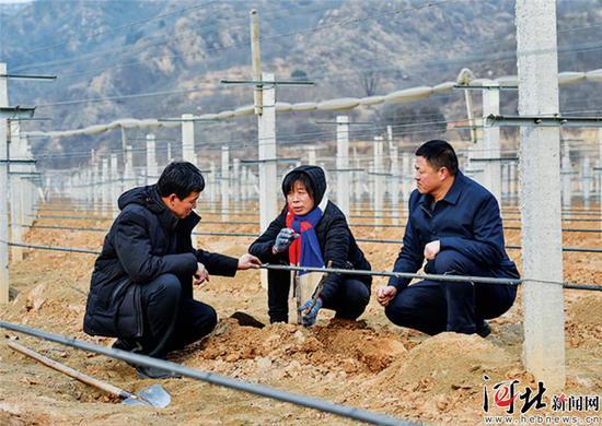 驻村干部和技术员范圈桃(中)春节期间到生态园查看葡萄藤过冬情况。