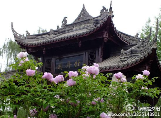 家庄植物园牡丹 新浪微博:@燕赵夕阳