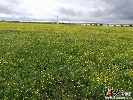图为沽源县鲜花盛开的五花草甸湿地景色。 记者高振发摄