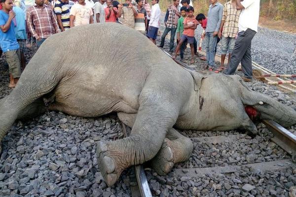 印度4头大象被火车撞飞现场