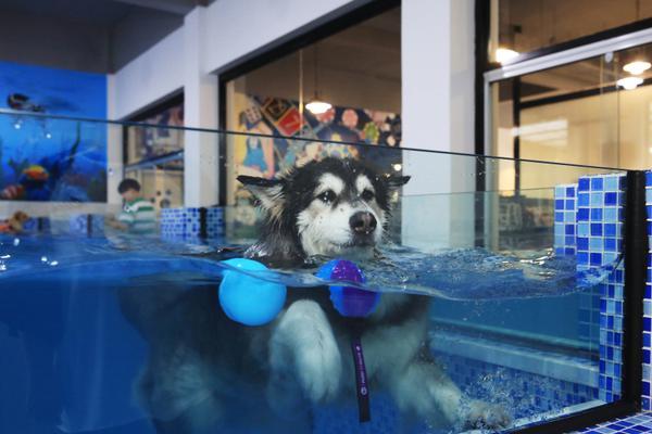杭州一宠物游泳池火了