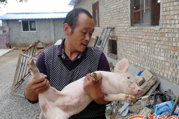 """贫困户发养猪视频成""""网红"""""""