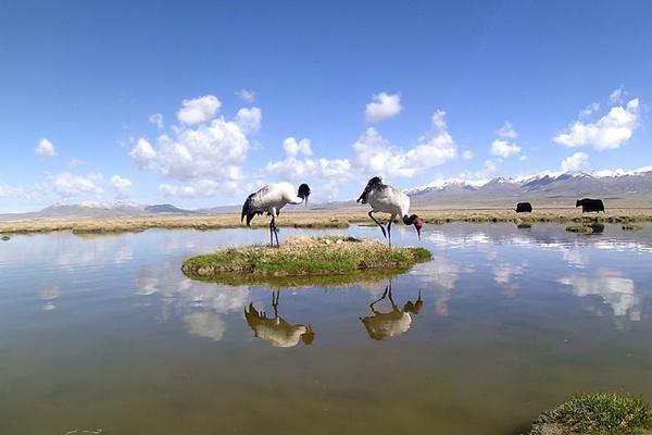 祁连山采集到黑颈鹤孵化影像