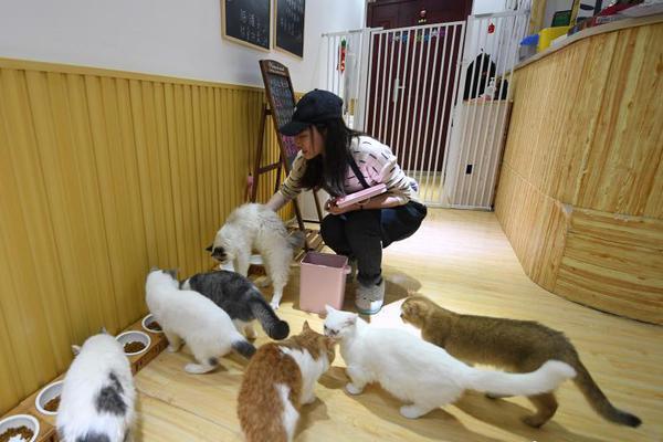 """""""宠物经济""""趋热 杭州撸猫馆受热捧"""