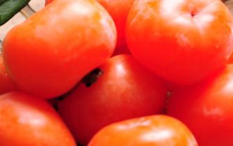 柿子浑身是宝 各个部分都可入药