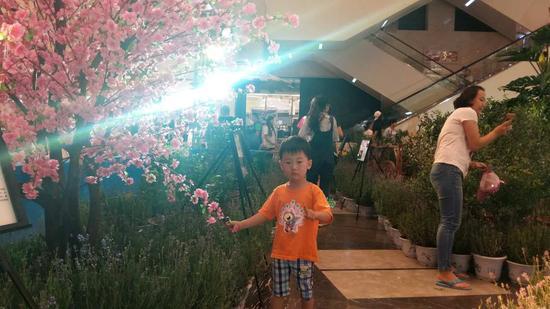 4D蓝莓彩蝶园趣游节