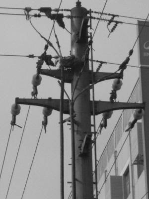 架在电线杆上的喜鹊窝着火后的残留物。   张先生 摄